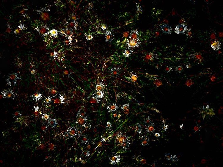 The final few from the series Memorial by Chris Frielhellip