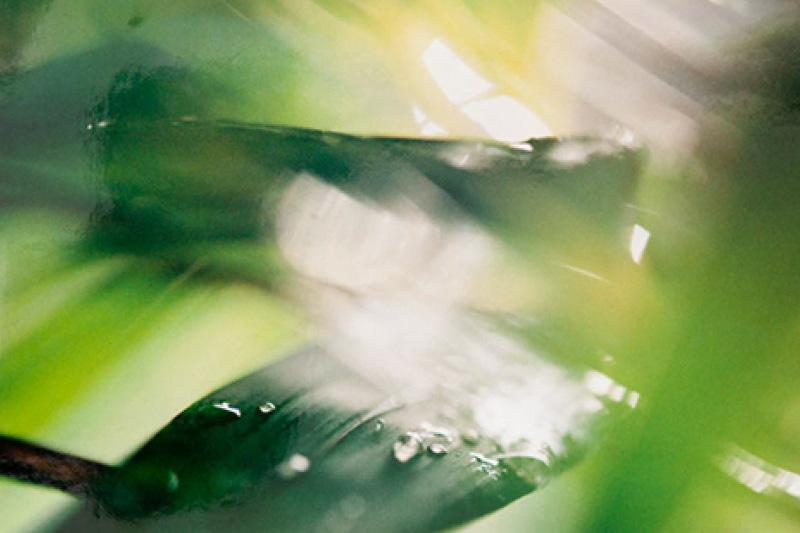John Blakemore - Seduced by light
