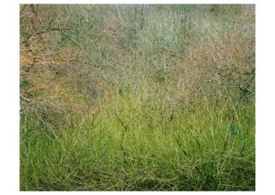 Chora - Limb Valley 12
