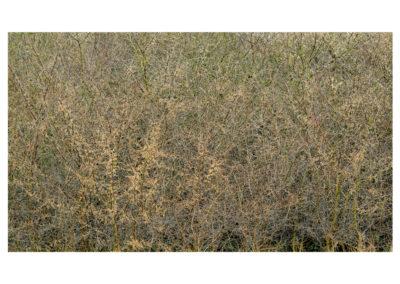 Chora - Meers Brook 15