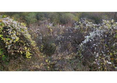 Terrain Vague - Blackburn Meadows 3