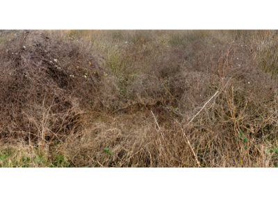 Terrain Vague - Blackburn Meadows 6