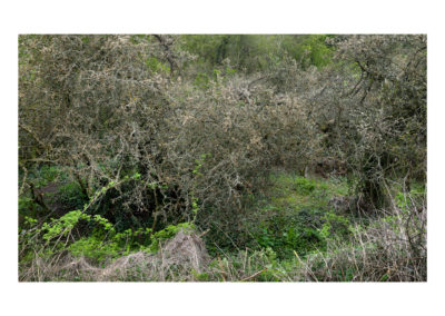 Terrain Vague - Shire Brook Valley 38