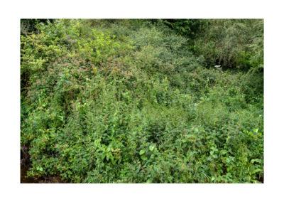 Terrain Vague - Shire Brook Valley 43