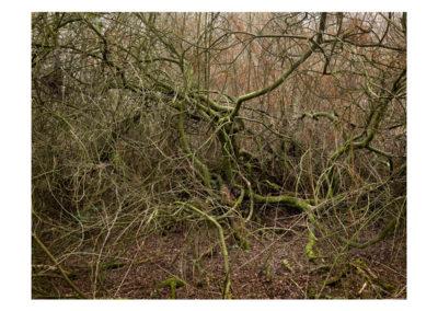 Terrain Vague - Totley Brook 3